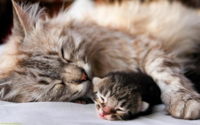 Котики: поразительные факты об этих действительно клёвых созданиях
