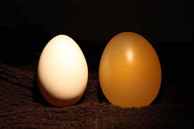 Что будет с яйцом в уксусе