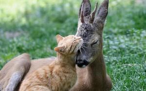 Кошка подружилась с оле…