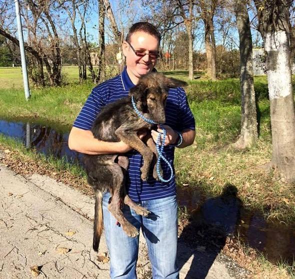 Удивительное спасение собаки и её восстановление добро, животные, люди, собака, спасение