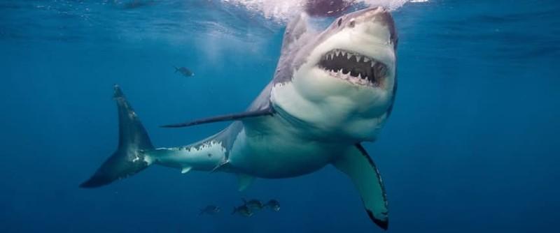 """""""Толстяк"""" и """"Малыш"""", или челюсти акул несут возмездие"""