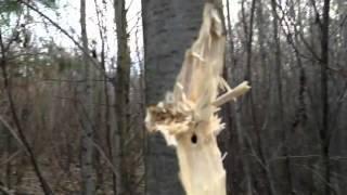 Цветы смерти. «Дум-дум» и другие убойные пули