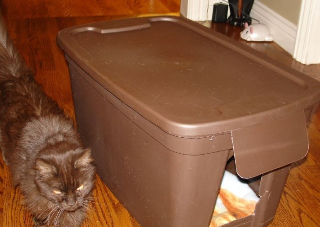 Интересное устройство для кошачьих забав. /Фото: i.pinimg.com