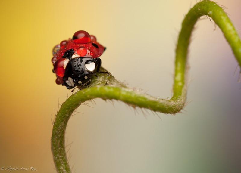 Насекомые - insects, энтомология | 575x800