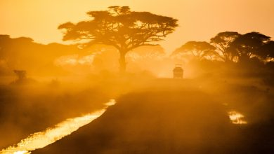 Photo of Going to the Mara, what do I need?