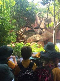 Year 3 Zoo 1