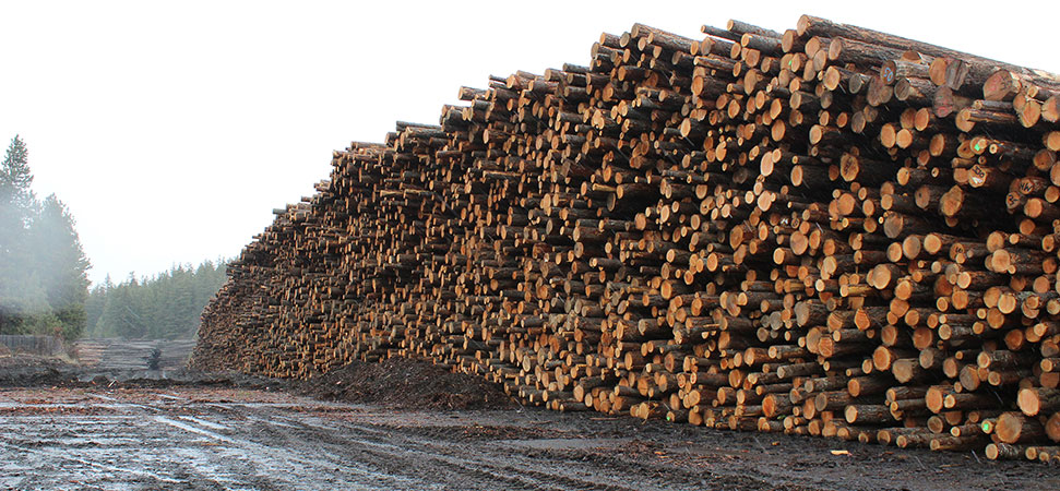 To connect with commercial forest products, log in or create an account. Mt Hood Forest Products A State Of The Art Producer Of High Quality Green Douglas Fir 2x4 And 2x6 Dimension Lumber