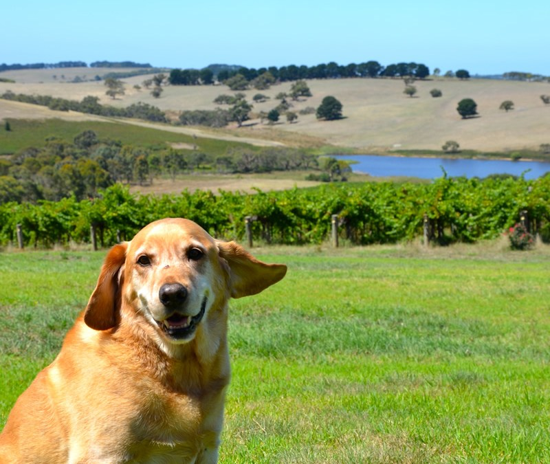Buster – Our first cellar dog…Now meet Jerry.