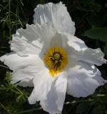 IMG-20120516-01096