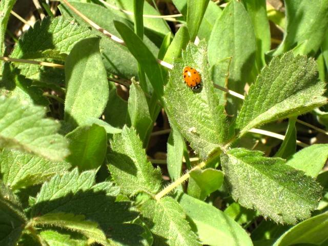 Arens with Ladybug