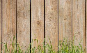 green grass beside brown wooden fence