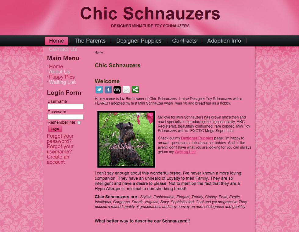 Chic Schnauzers - Nibley, UT