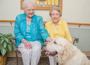 Therapy Dogs bring joy