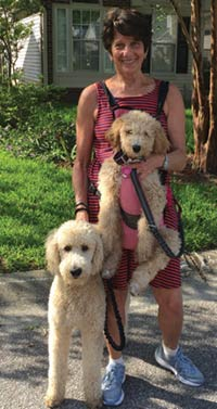 MT PLEASANT FAVORITE PET: Shiloh and Maya the Standard poodles