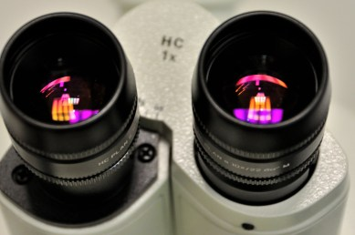 microscope oculars close-up, MTTlab - your preclinical CRO for in vitro and in vivo research