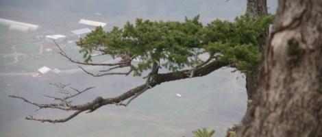 Tuff Tree