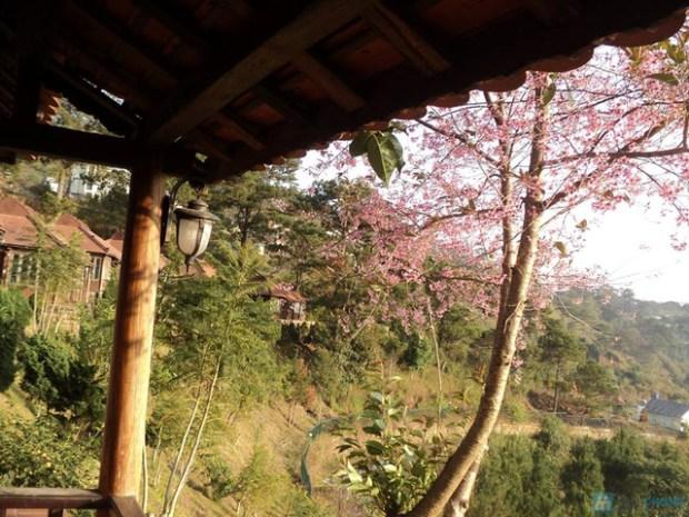 Nghỉ dưỡng tại Osaka Village Đà Lạt,Bungalow  kèm bữa sáng alacart dành cho 2 người trong 2 ngày 1 đêm  - 8