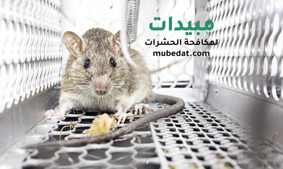 مكافحة الفئران والقضاء عليها