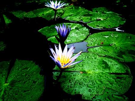 A Ressonância do Dharma