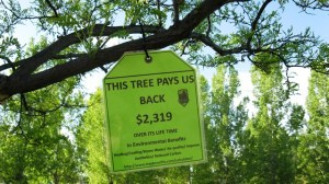 tree price tag