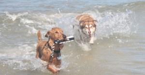 tila-and-walcott-fun-in-the-water-san-carlos-may-2010