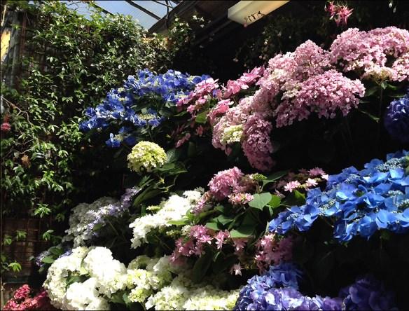 Marché aux Fleurs; pic: Steve Sampson
