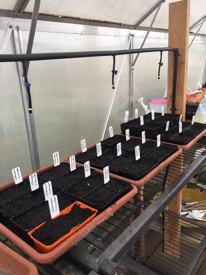Greenhouse – irrigation