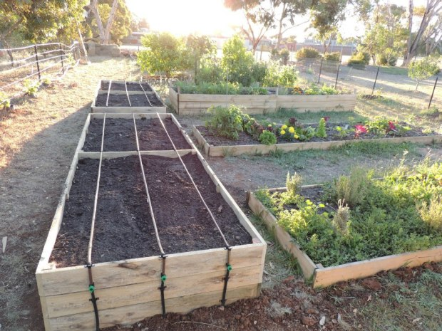 Veg garden - initial treated pine beds