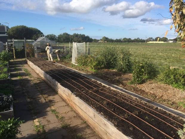 Veg garden - long box finishing touches