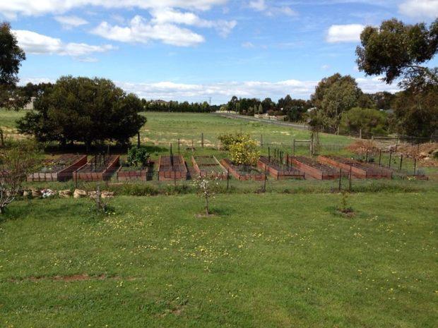 Veg garden - starting out 1