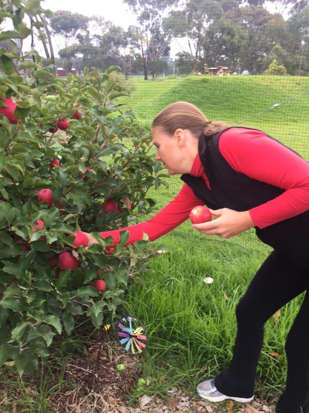 Lush apples