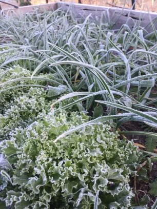 Lettuce and garlic