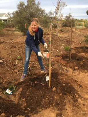 Applying biodynamic tree paste