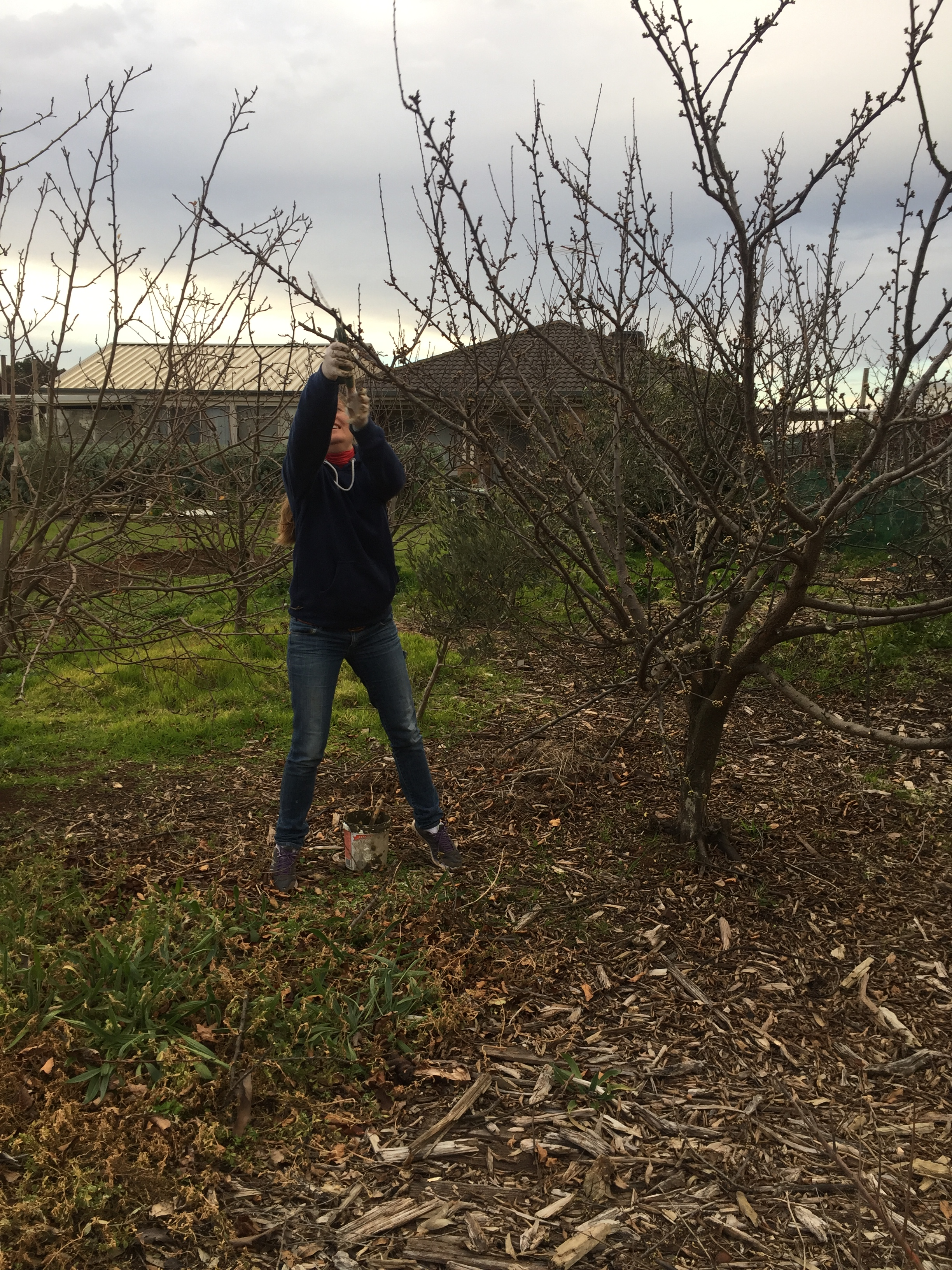 Patricia pruning