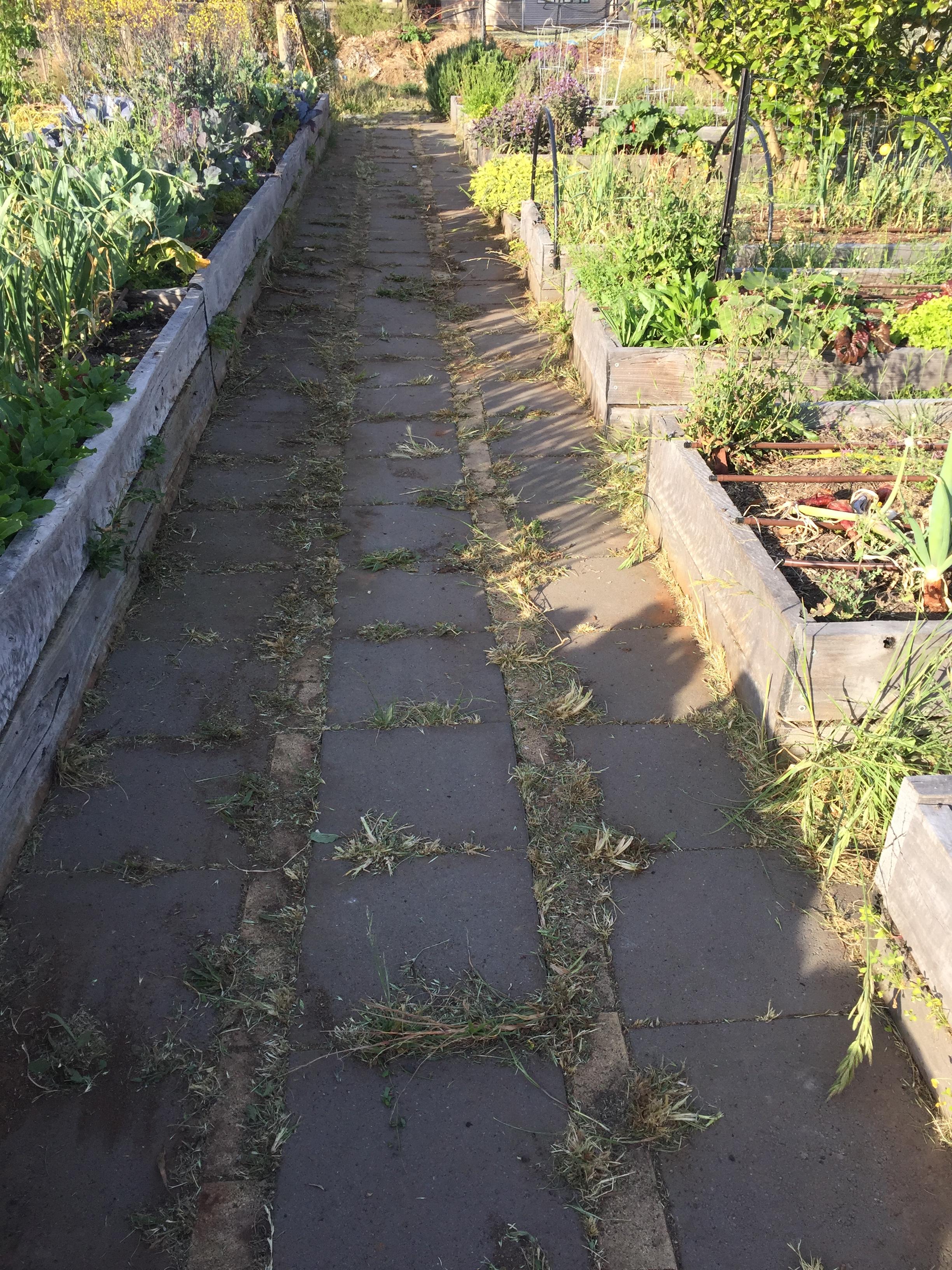 Veg garden after makeover