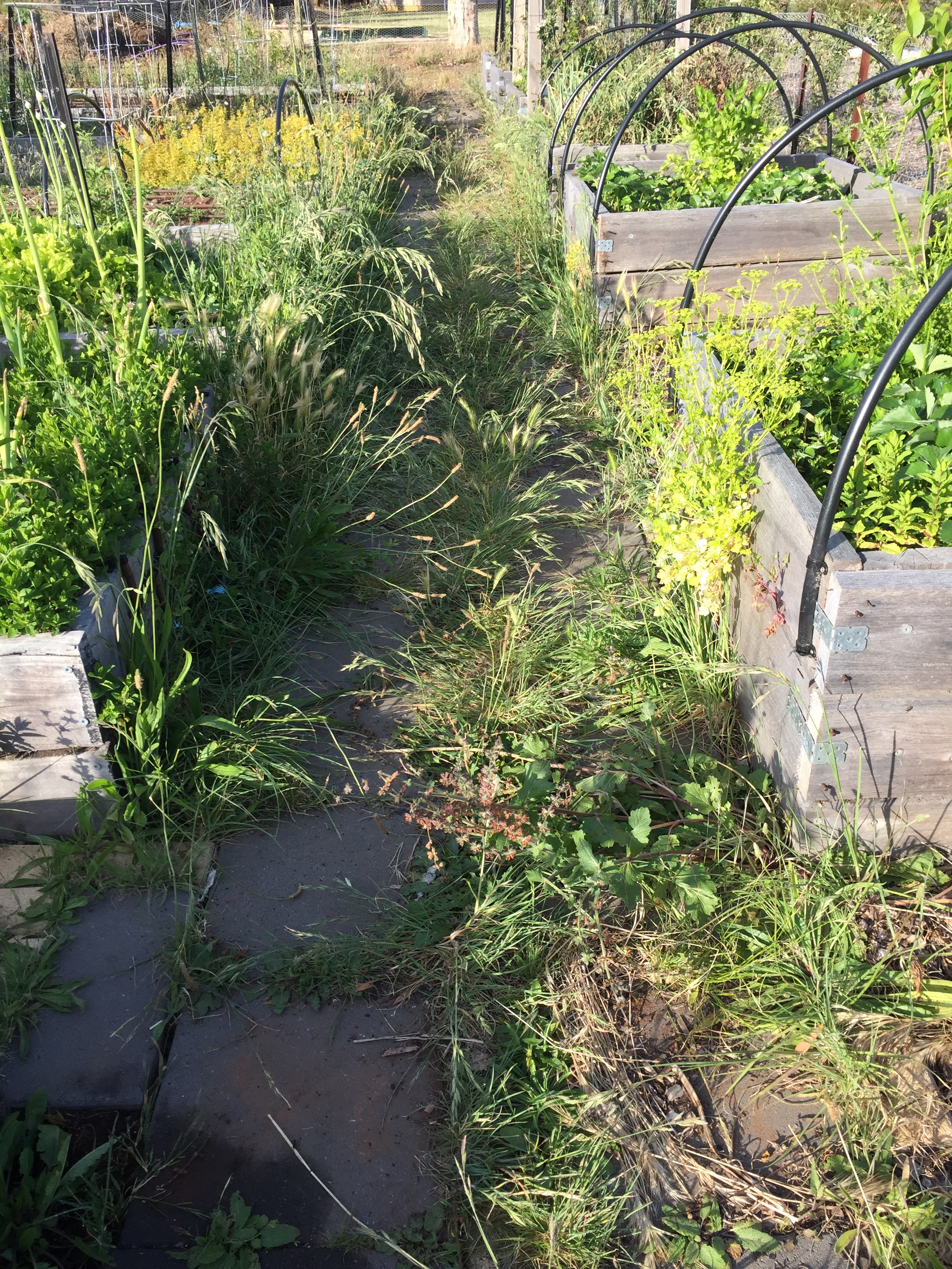Veg garden neglect