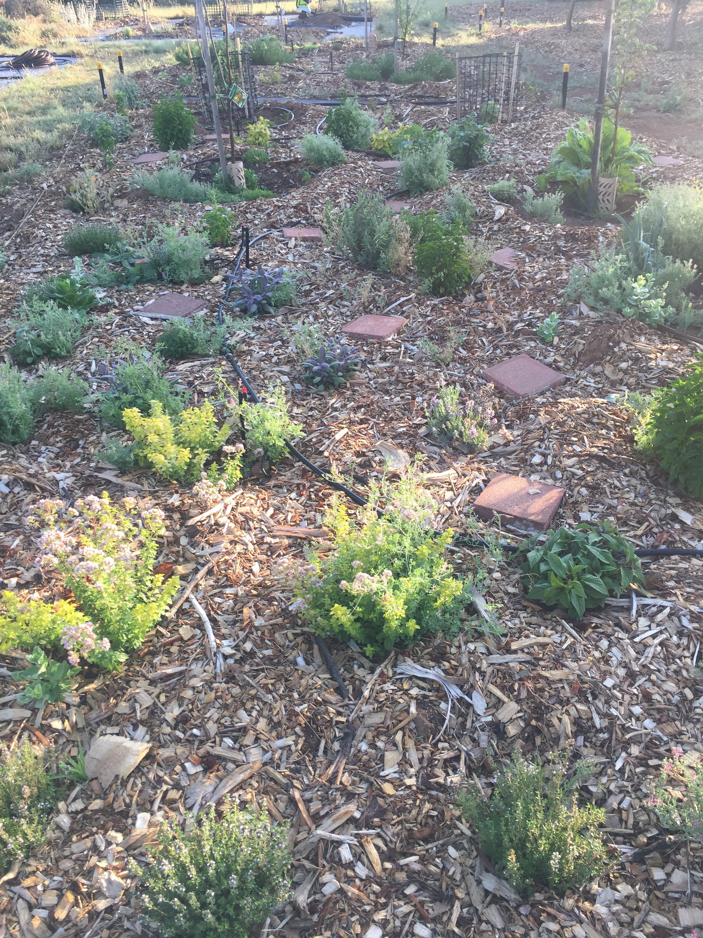 ESummer herb garden