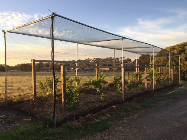 Nets - grapes prototype