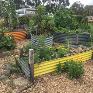Raised no-dig beds in the community garden