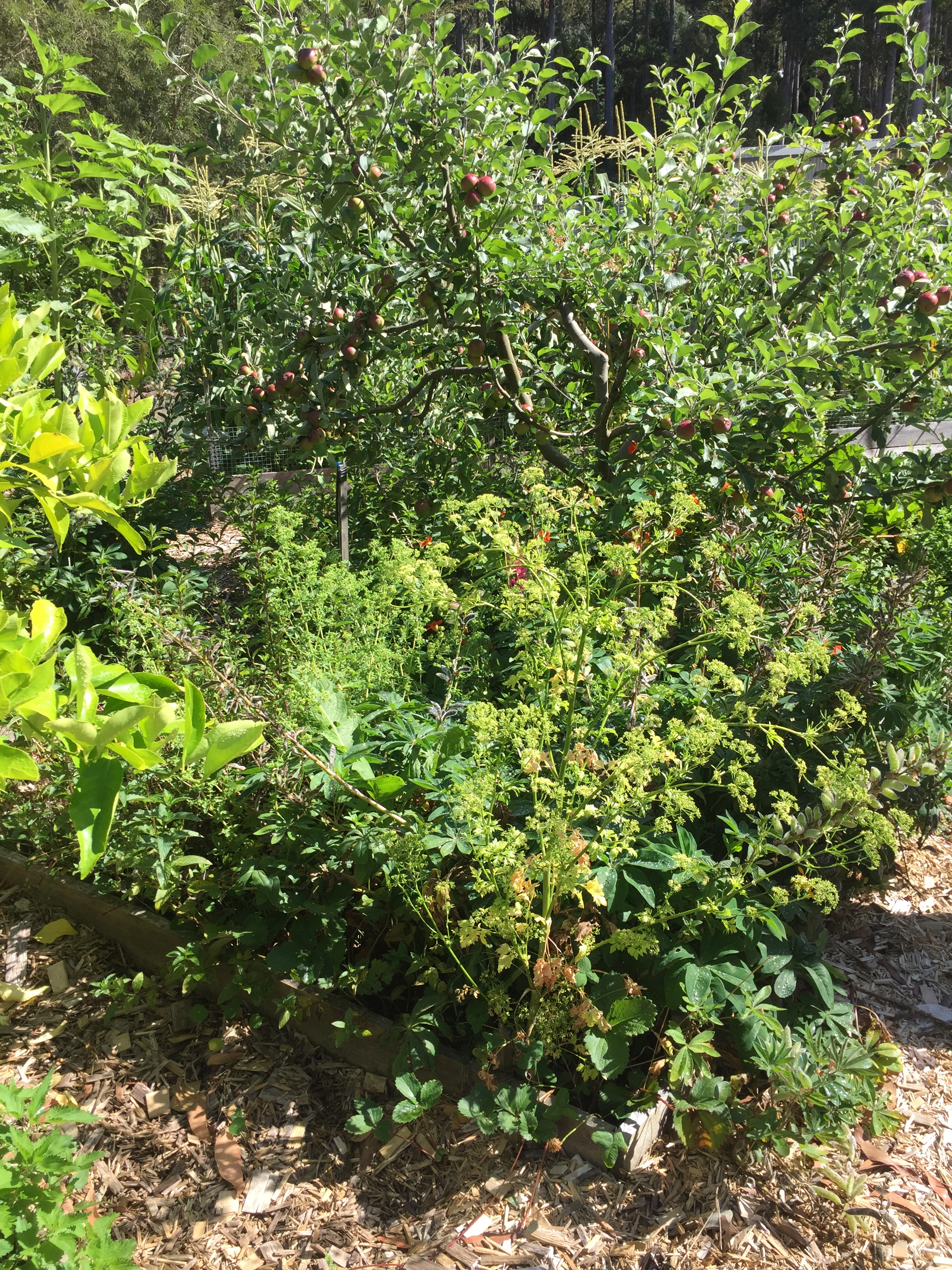 PDC site food forest