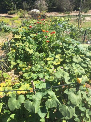 Pumpkin, squash and flowers