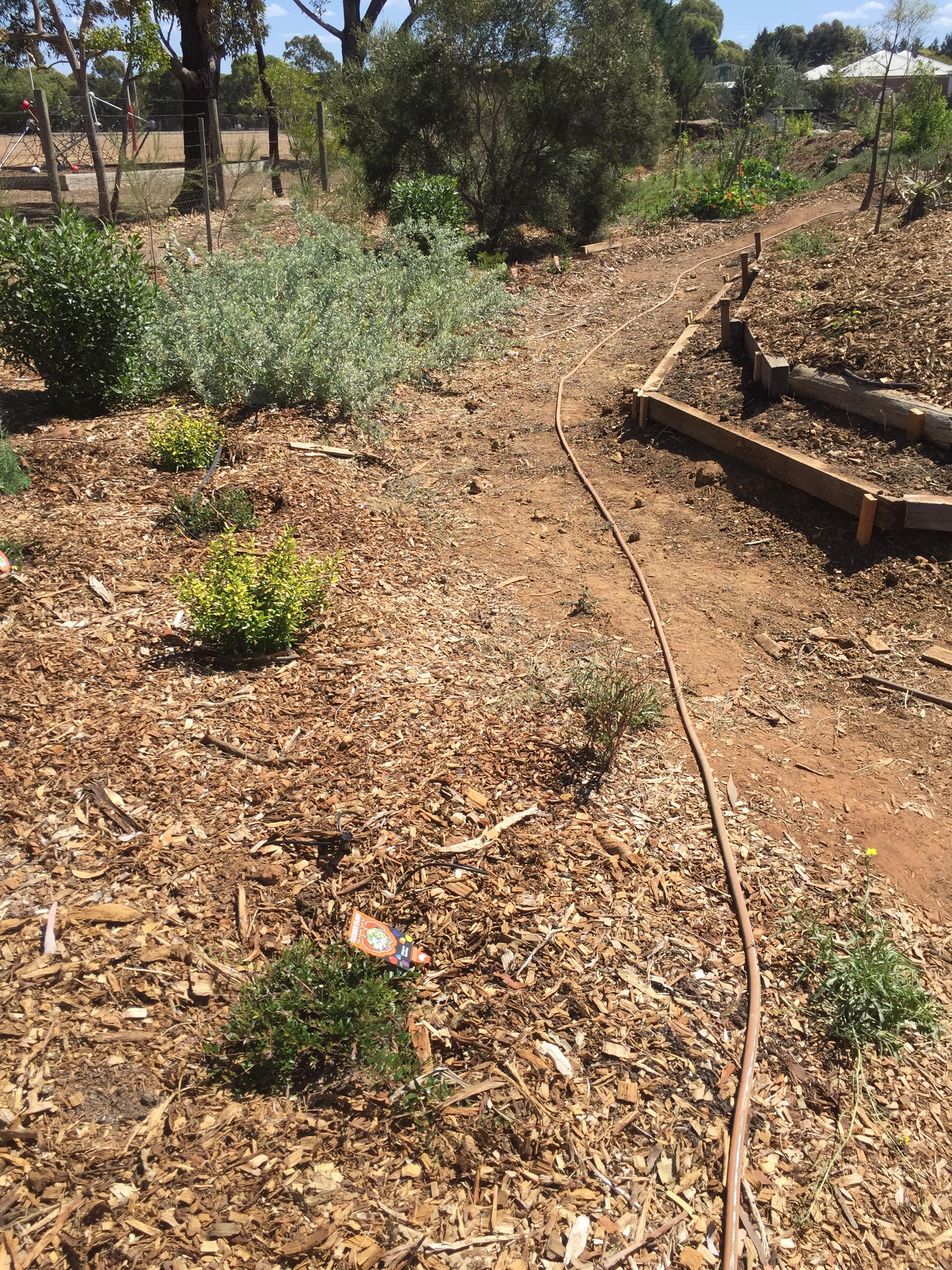Walk – bush tucker walk