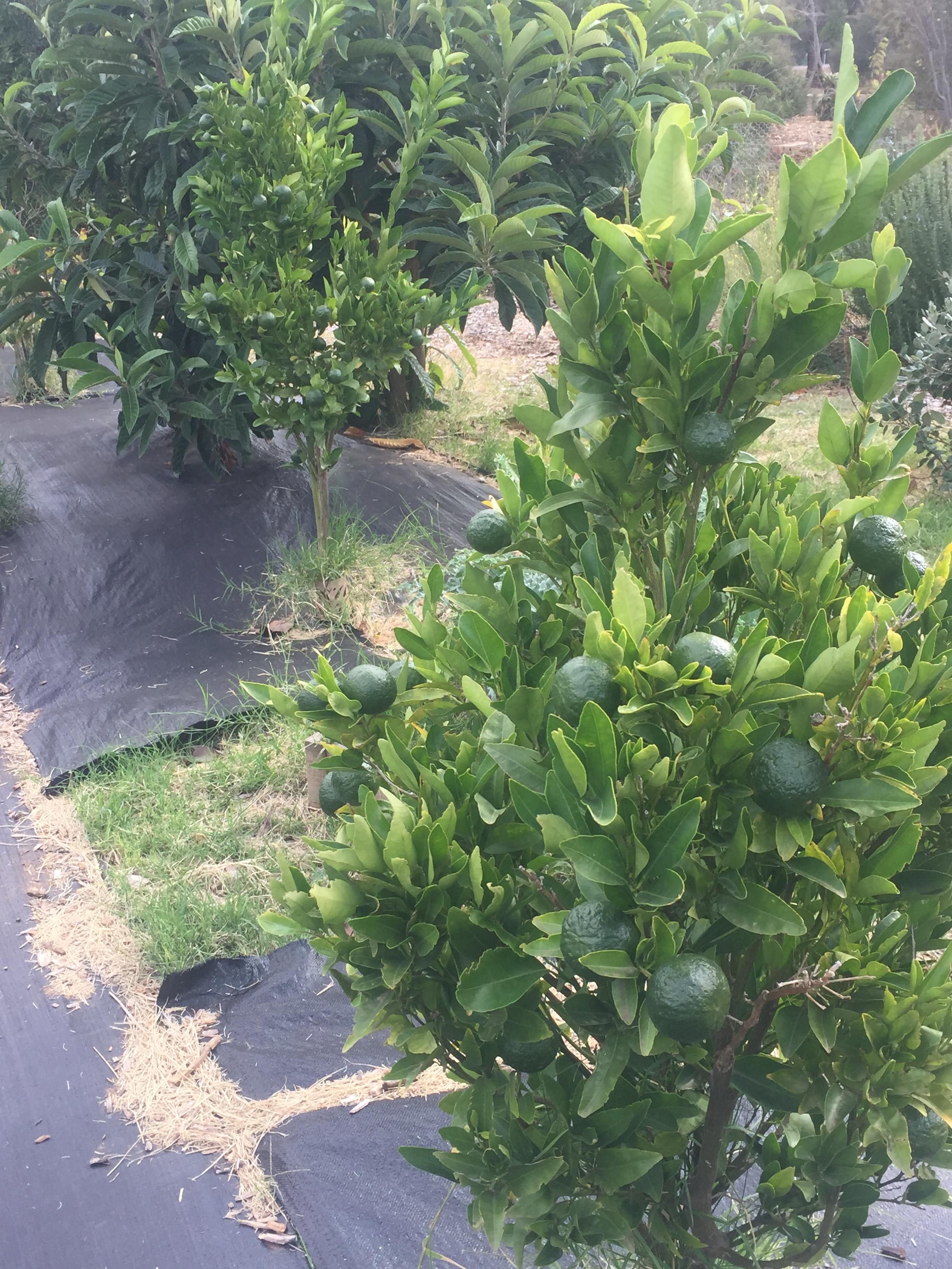 fall – citrus