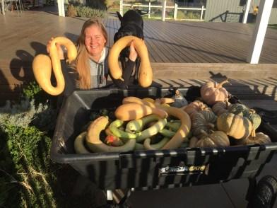 fall - pumpkin harvest 2