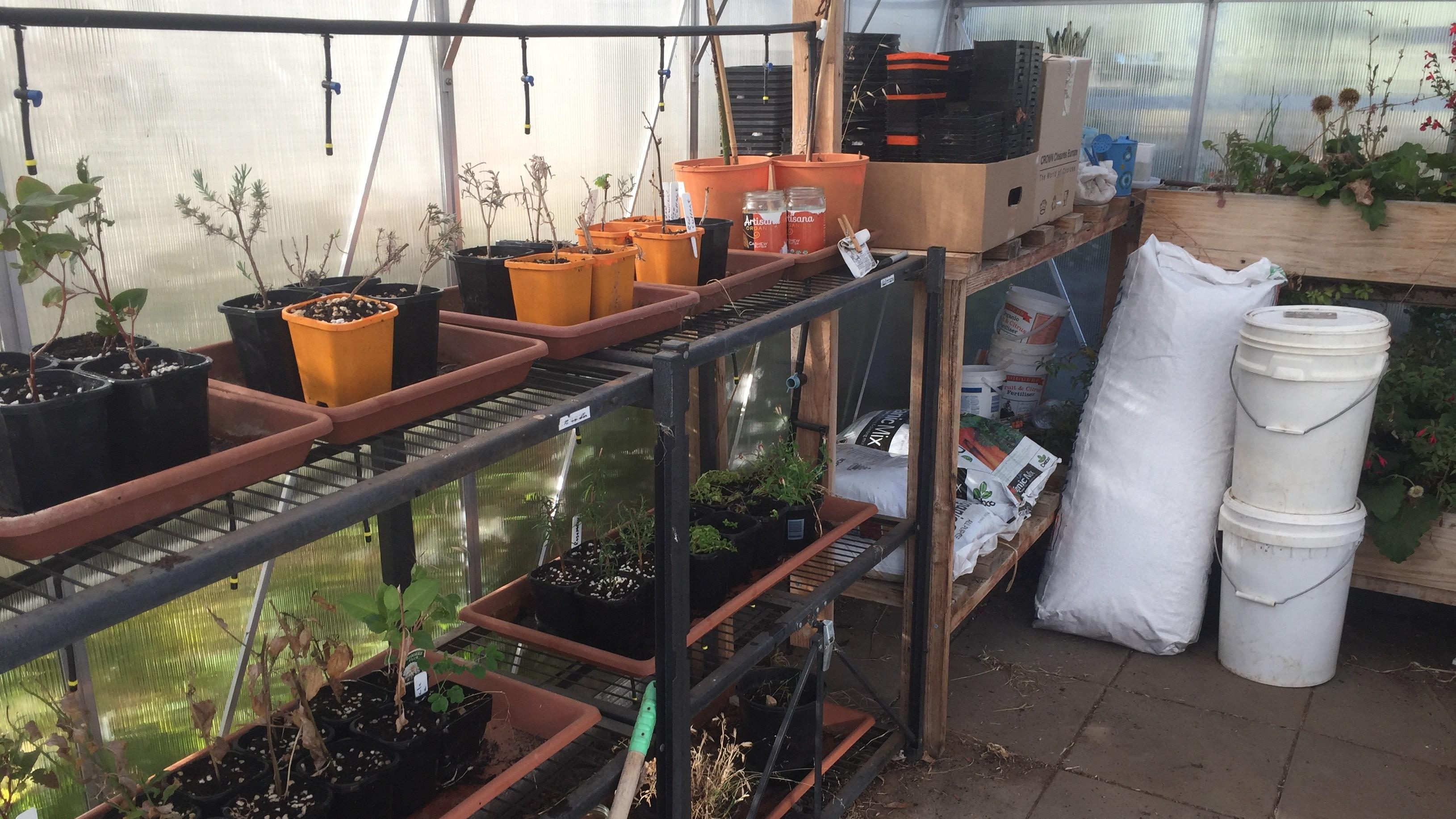 seed – crowded house