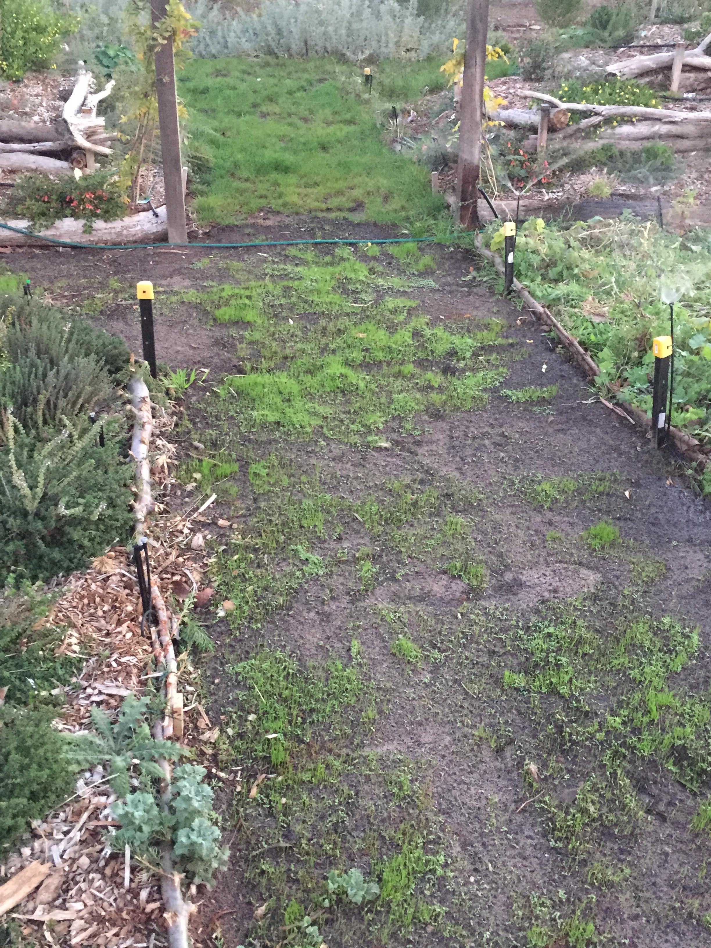 Path2 – green sheen