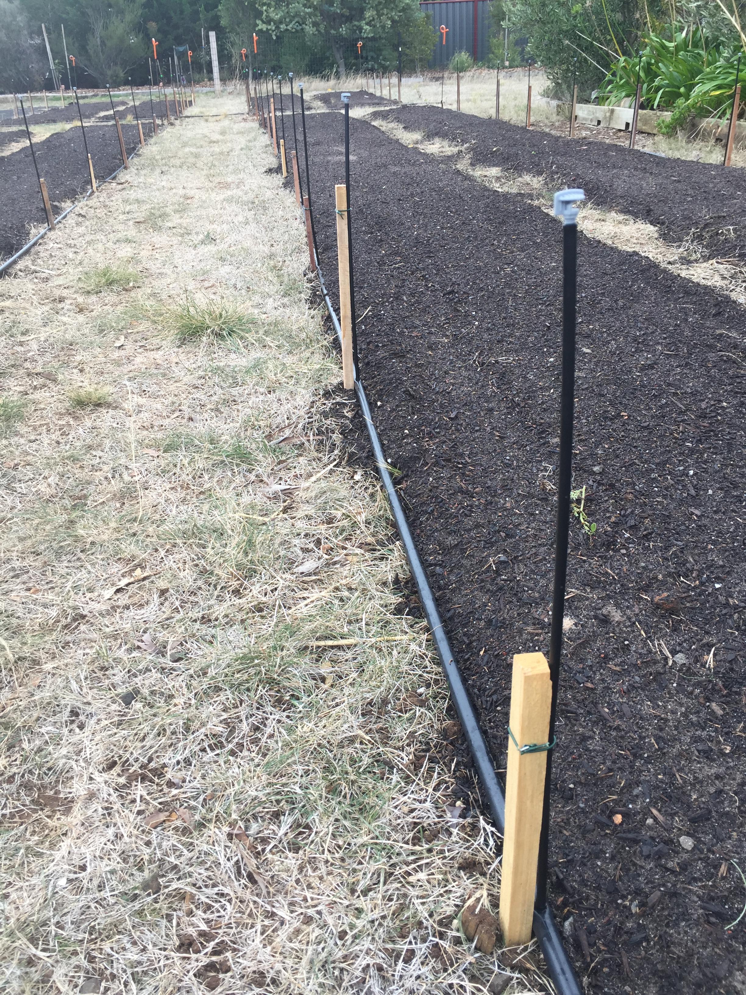 Veg – homemade stakes