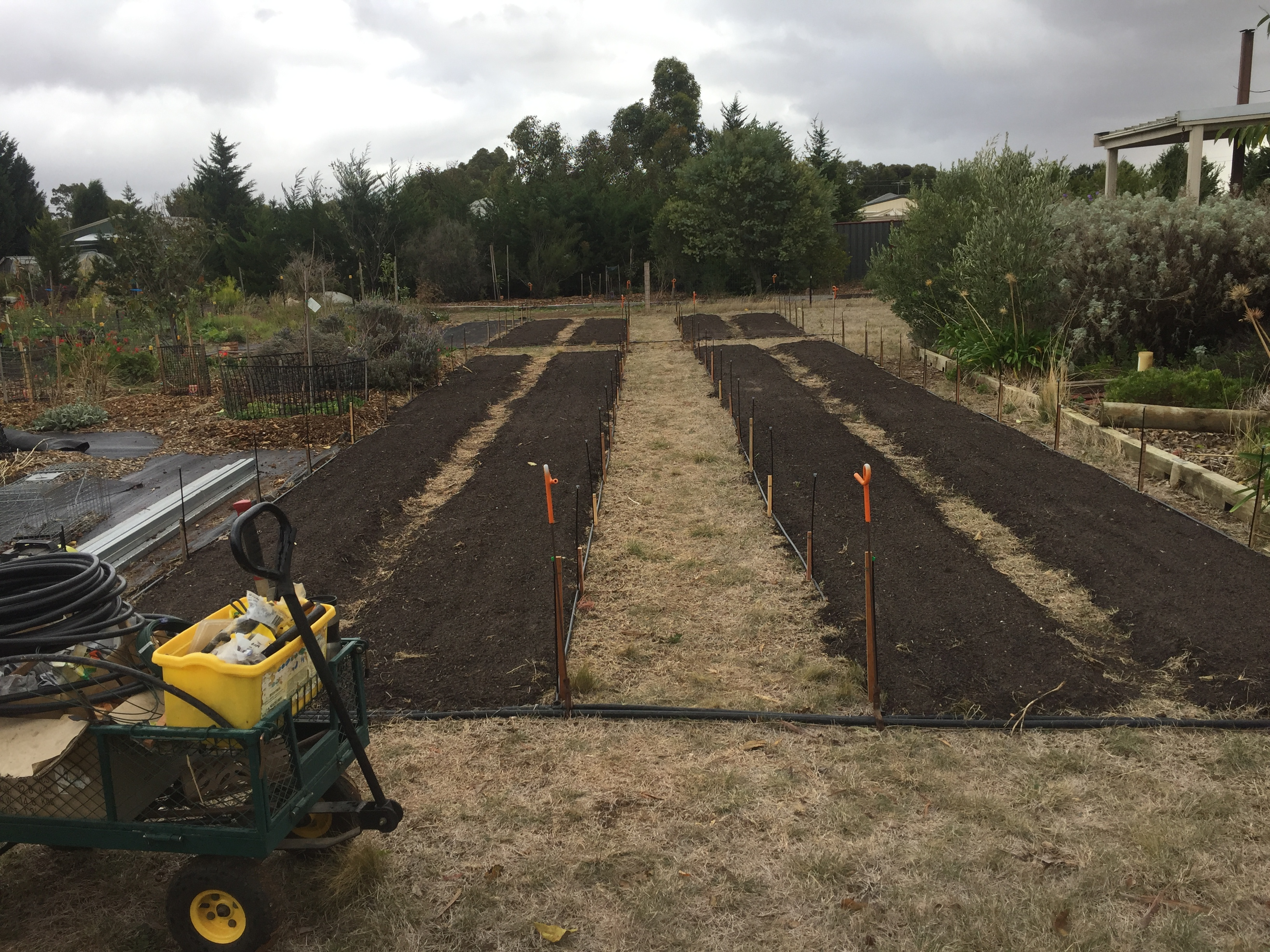 Veg – irrigation done