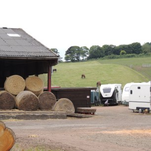 Work area and horses
