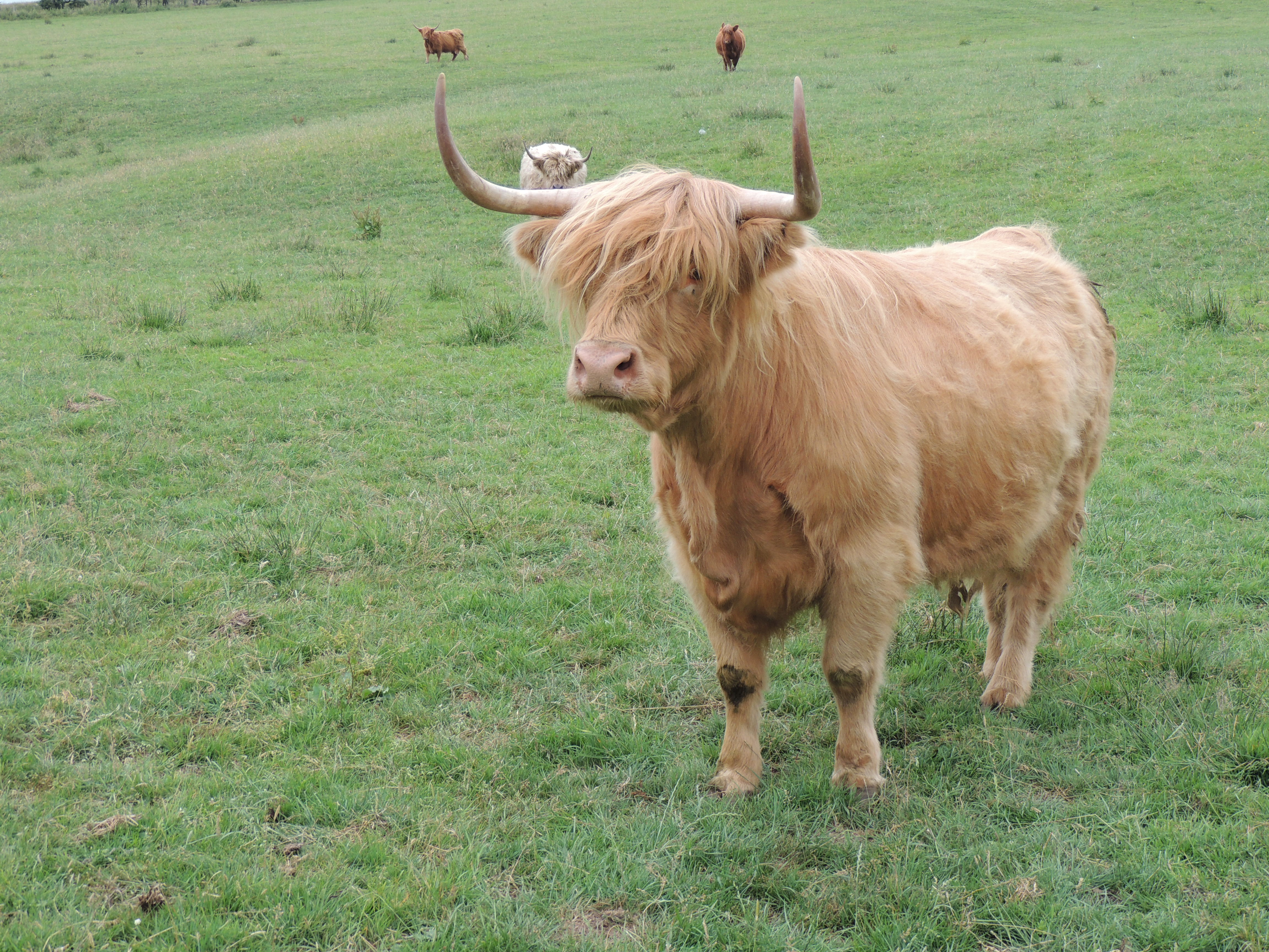 Clyde – coos 1
